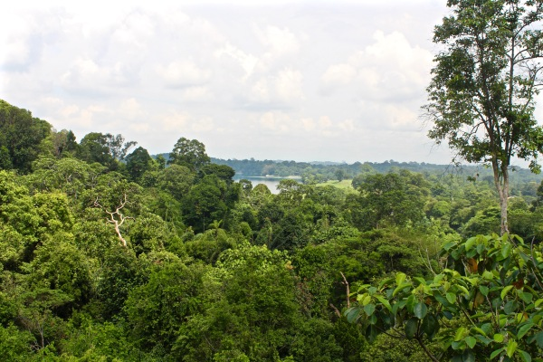 Treetop Walk, MacRitchie Reservoir
