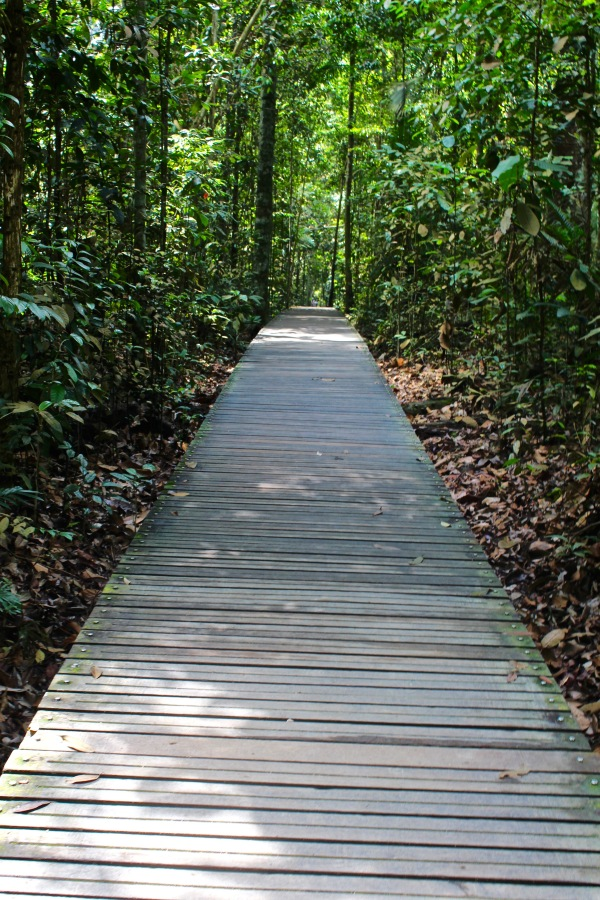 MacRitchie Nature Reserve