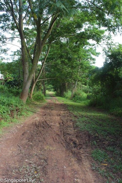 Green corridor-1-66