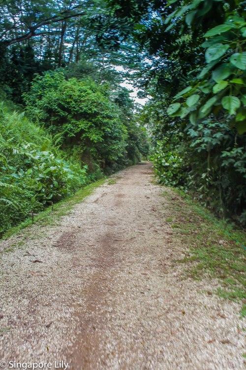 Green corridor-1-67