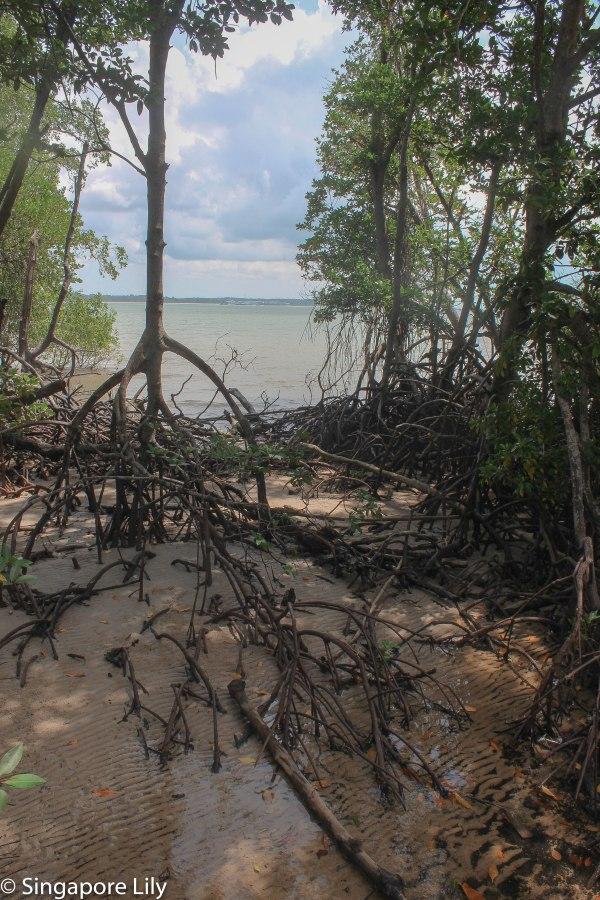 Pulau Ubin-1-37