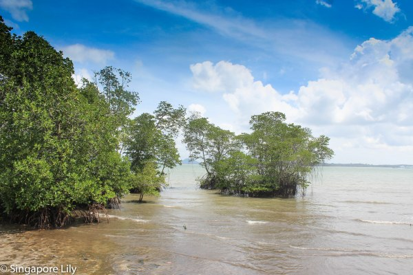 Pulau Ubin-1-40