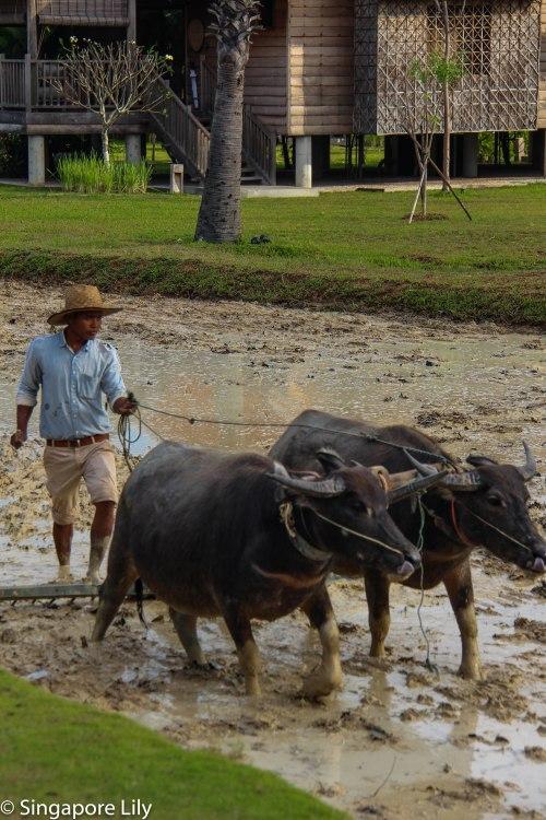 Phum Baitang, Siem Reap, Cambodia